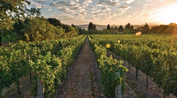 2007 DFV Wines, Irony Russian River Pinot Noir, Californien, USA