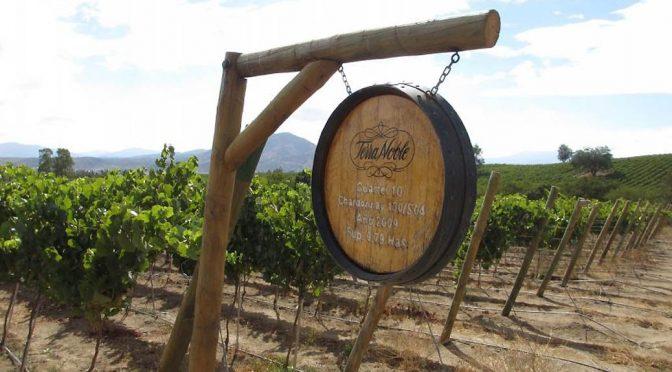 2010 Viñedos Terra Noble, Pinot Noir Reserva, Aconcagua, Chile