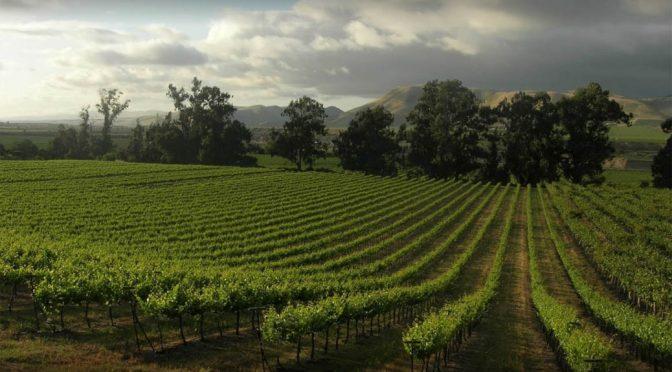 2008 Lucas & Lewellen Vineyards, Pinot Noir, Californien, USA