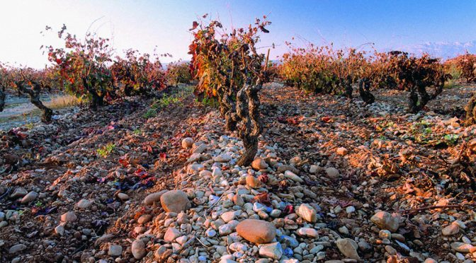 2004 Finca Valpiedra, Finca Valpiedra Reserva, Rioja, Spanien