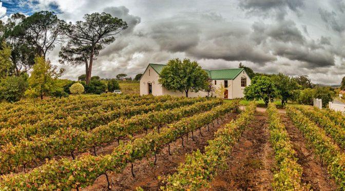 2008 Le Riche Wines, Cabernet Sauvignon Reserve, Stellenbosch, Sydafrika