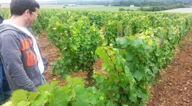 aktieselskabet franske vingårde