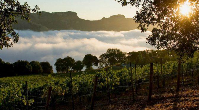 2005 Seghesio Family Vineyards, Home Ranch Petite Sirah, Californien, USA