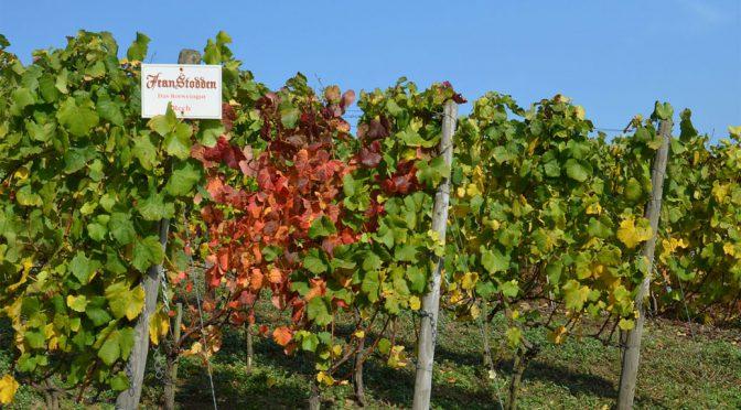 2010 Weingut Jean Stodden, Pinot Noir Recher Herrenberg, Ahr, Tyskland