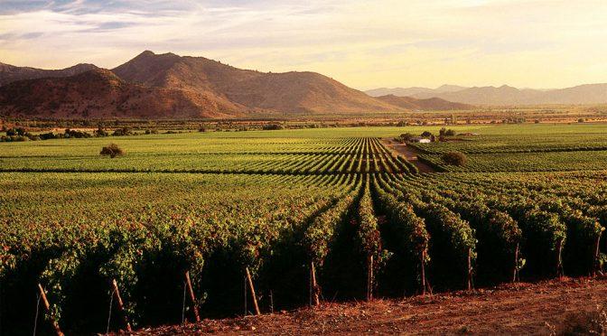 2012 Viña Errazuriz, Arboleda Pinot Noir, Aconcagua Valley, Chile