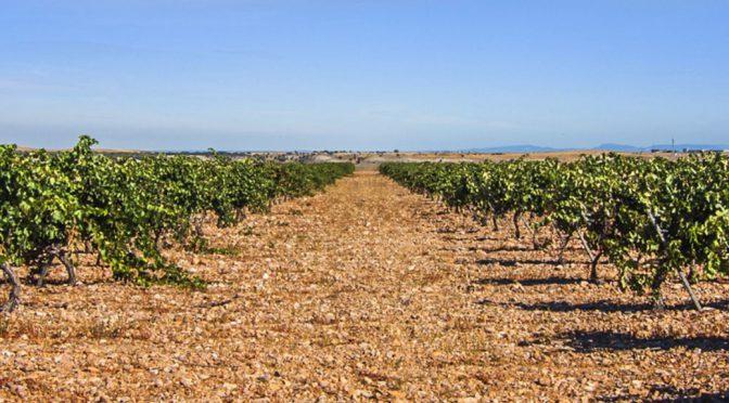 2012 Bodega la Milagrosa, Milcampos Viñas Viejas, Ribera del Duero, Spanien