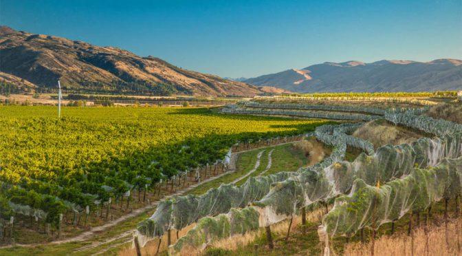 2012 Kim Crawford Wines, Pinot Noir, Marlborough, New Zealand