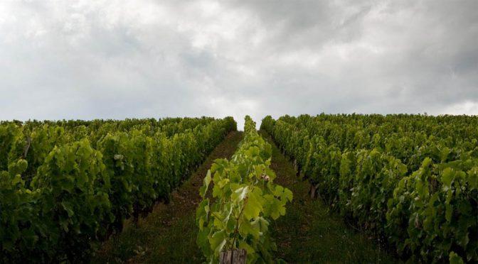 2009 Stou Kir Yianni Wines, Delfis Cabernet Merlot, Cypern