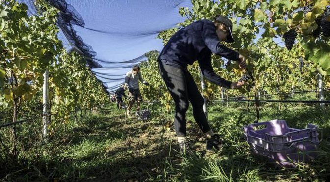 2010 Felton Road Wines, Bannockburn Pinot Noir, Central Otago, New Zealand