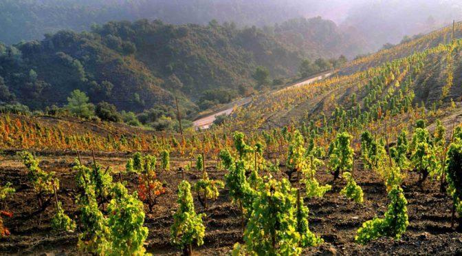 2012 Bodegas Palacios Remondo, La Montesa, Rioja, Spanien
