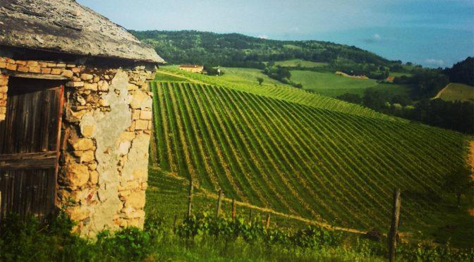 2008 Progetto Vino, Piedelmonaco Primitivo Limited Edition, Puglia, Italien
