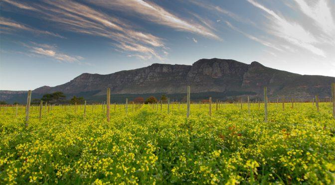 2014 Klein Constantia, Sauvignon Blanc, Western Cape, Sydafrika
