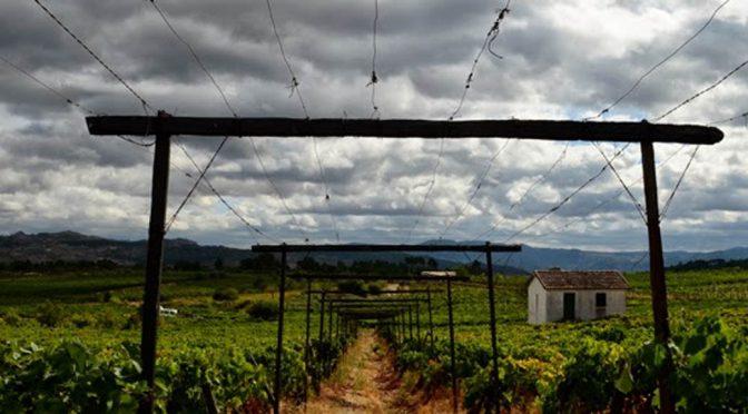 2011 Folias de Baco, Olho no Pé Pinot Noir Reserva, Douro, Portugal