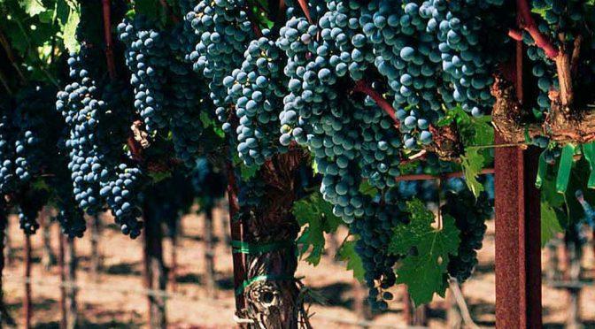 2012 Frank Family Vineyards, Napa Valley Cabernet Sauvignon, Californien, USA