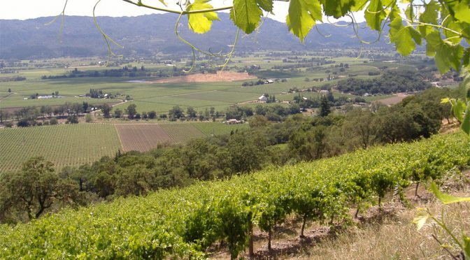 2013 Frank Family Vineyards, Carneros Chardonnay, Californien, USA