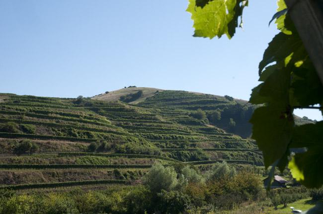 vinmarker-bag-franz-keller