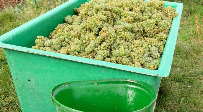 2015 Weingut Brand, Pinot Blanc Cuvée Natur, Pfalz, Tyskland