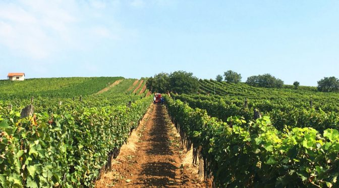 2014 Szent Tamás Vineyards and Winery, Mád Furmint, Tokaj, Ungarn