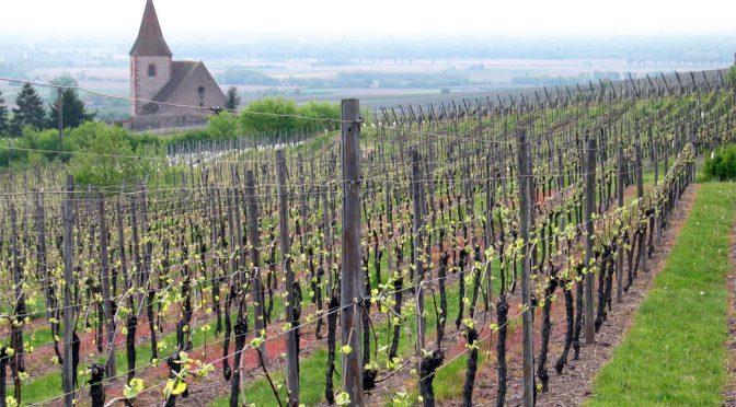 2013 Domaine Sipp Mack, Riesling Vieilles Vignes, Alsace, Frankrig