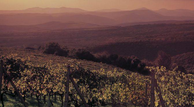 2010 Terre Nere Campigli Vallone, Rosso di Montalcino, Toscana, Italien