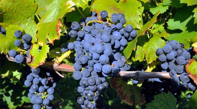 2006 Weingut Solveigs, Micke Pinot Noir, Rheingau, Tyskland