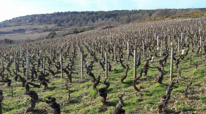 2015 David Moreau, Santenay Cuvée S, Bourgogne, Frankrig