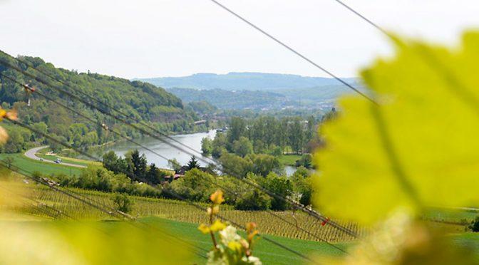 2015 Weingut Rinke, Langsurer Brüderberg Pinot Noir, Mosel, Tyskland