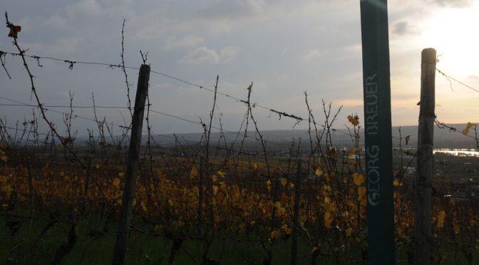 Besøg hos Weingut Georg Breuer … i deres hippe, moderne vinothek