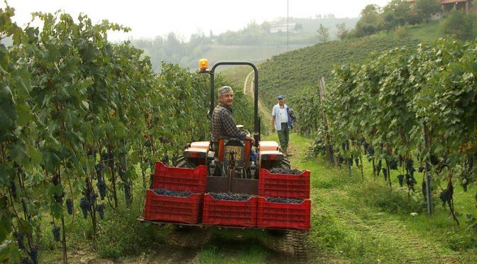 2013 Filippo Costa, Nebbiolo D'Alba Bricco Barone, Piemonte, Italien