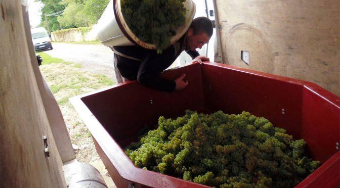 2015 Albert Sounit, Crémant de Bourgogne Chardonnay Brut, Bourgogne, Frankrig