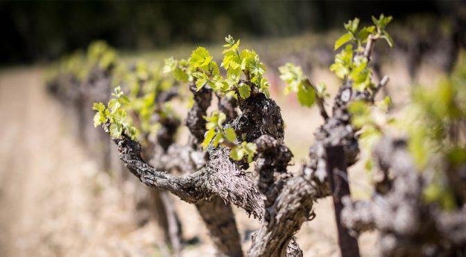 2014 Maison Gabriel Meffre, La Châsse Côtes du Rhône Villages Winemaker's Selection, Rhône, Frankrig