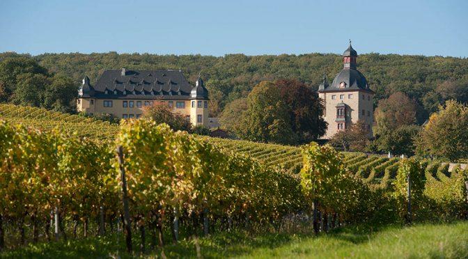 2015 Weingut Schloss Vollrads, Riesling Alte Reben, Rheingau, Tyskland
