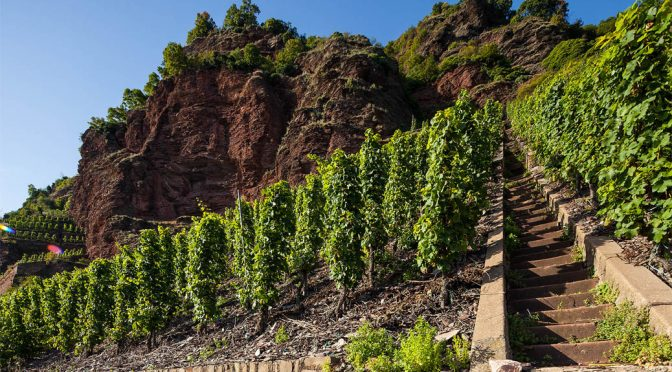 2015 Weingut Schmitges, Erdener Treppchen Riesling GG, Mosel, Tyskland