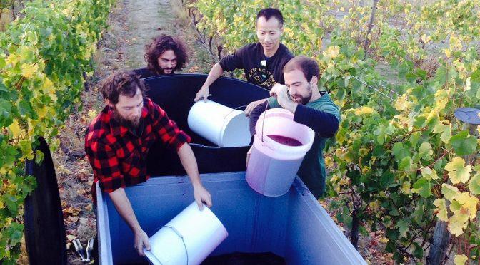 2009 Muddy Water Wines, Pinot Noir Hare's Breath, Waipara, New Zealand