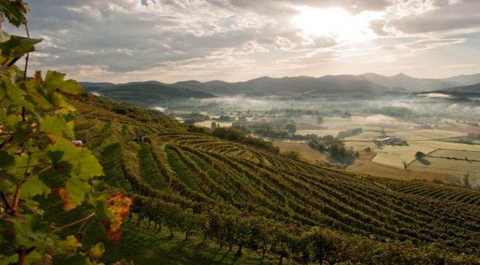 Smagning af vine fra Sud-Ouest … Frankrigs nok mest oversete vinregion