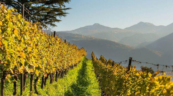 2014 Tenuta J. Hofstätter, Barthenau Vigna S. Urbano Pinot Nero, Alto Adige, Italien