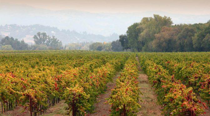 2009 Lyeth Estate, Pinot Noir, Californien, USA