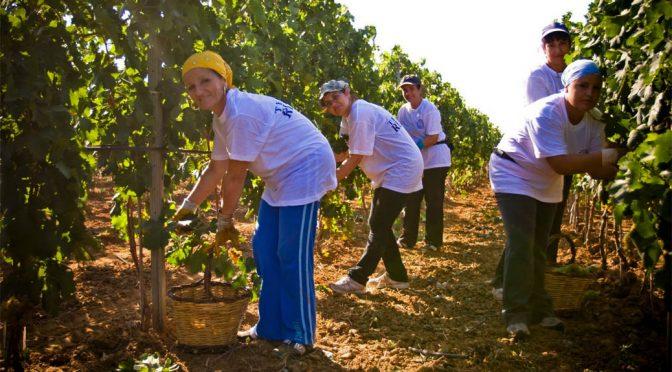 2007 Tenute Rubino, Primitivo Del Sole IGT, Puglia, Italien