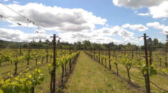 2008 Z'IVO Wines, Riesling, Washington State, USA