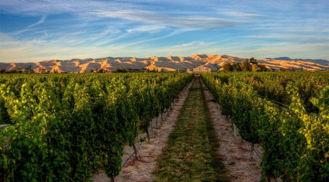 2008 Winegrowers of Ara, Pinot Noir Composite, Marlborough, New Zealand