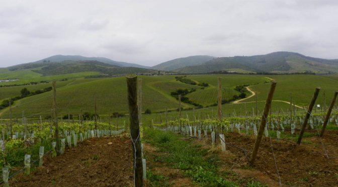 2011 Viña Leyda, Pinot Noir Lot 21, Leyda Valley, Chile