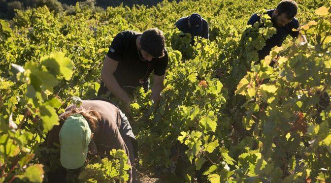 2009 Vignerons Catalans, Muscat de Rivesaltes Vingrau Vintage, Roussillon, Frankrig