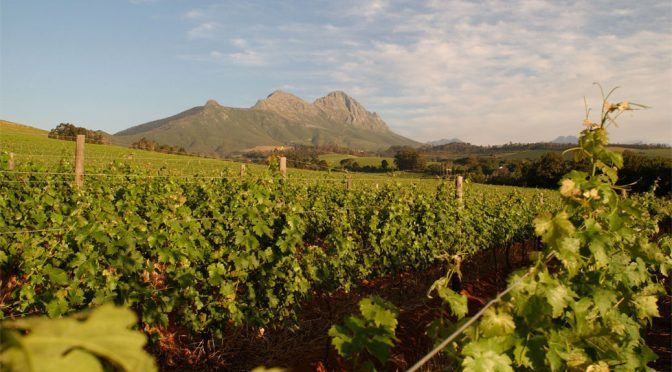 2010 Warwick Estate, Three Cape Ladies, Stellenbosch, Sydafrika