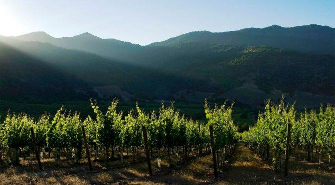 2012 Caliterra Winery, Sauvignon Blanc Reserva, Colchagua Valley, Chile