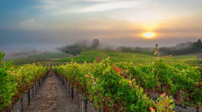 2009 Rochioli Vineyards & Winery, Estate Pinot Noir, Californien, USA