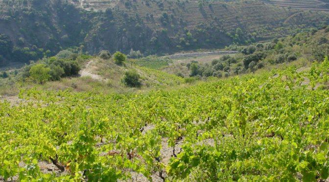 1999 Bodegas Bordalás Garcia, Gueta-Lupia, Priorat, Spanien