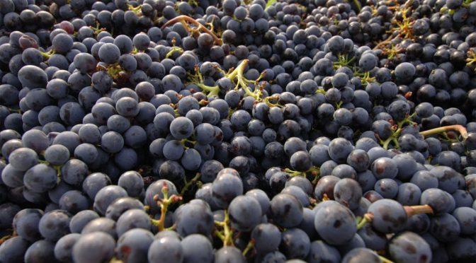 2011 Taster Wine, Fiorino Toscana Rosso IGT, Toscana, Italien