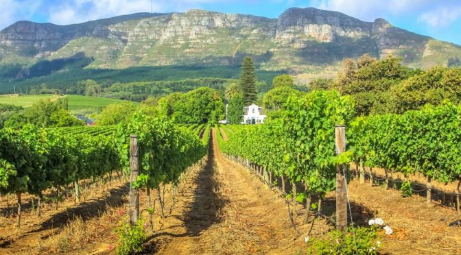 2011 Graceland Vineyards, Strawberry Fields, Stellenbosch, Sydafrika