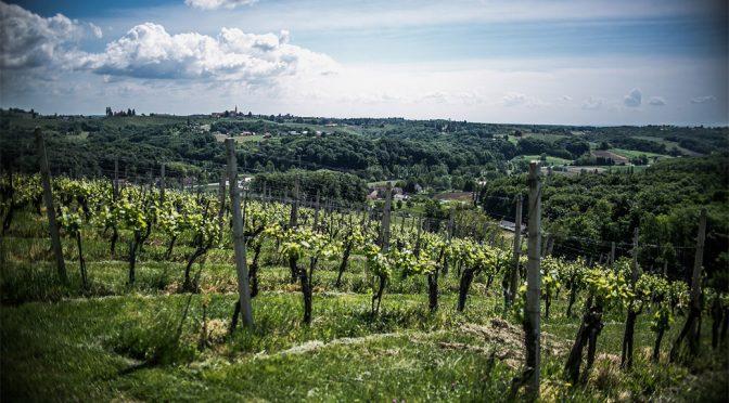 2012 Verus Vineyards, Riesling, Slovenien