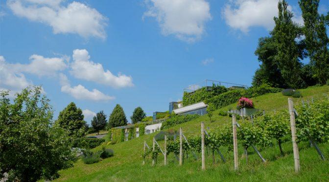 2012 Weingut Neumeister, Sauvignon Blanc Steirische Klassik, Südoststeiermark, Østrig